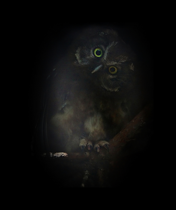 Little owl in darkness by Lilia73