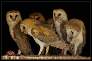 Owl's Family by Lilia73