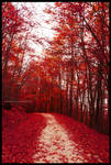 Red fall by daisukekuroneko