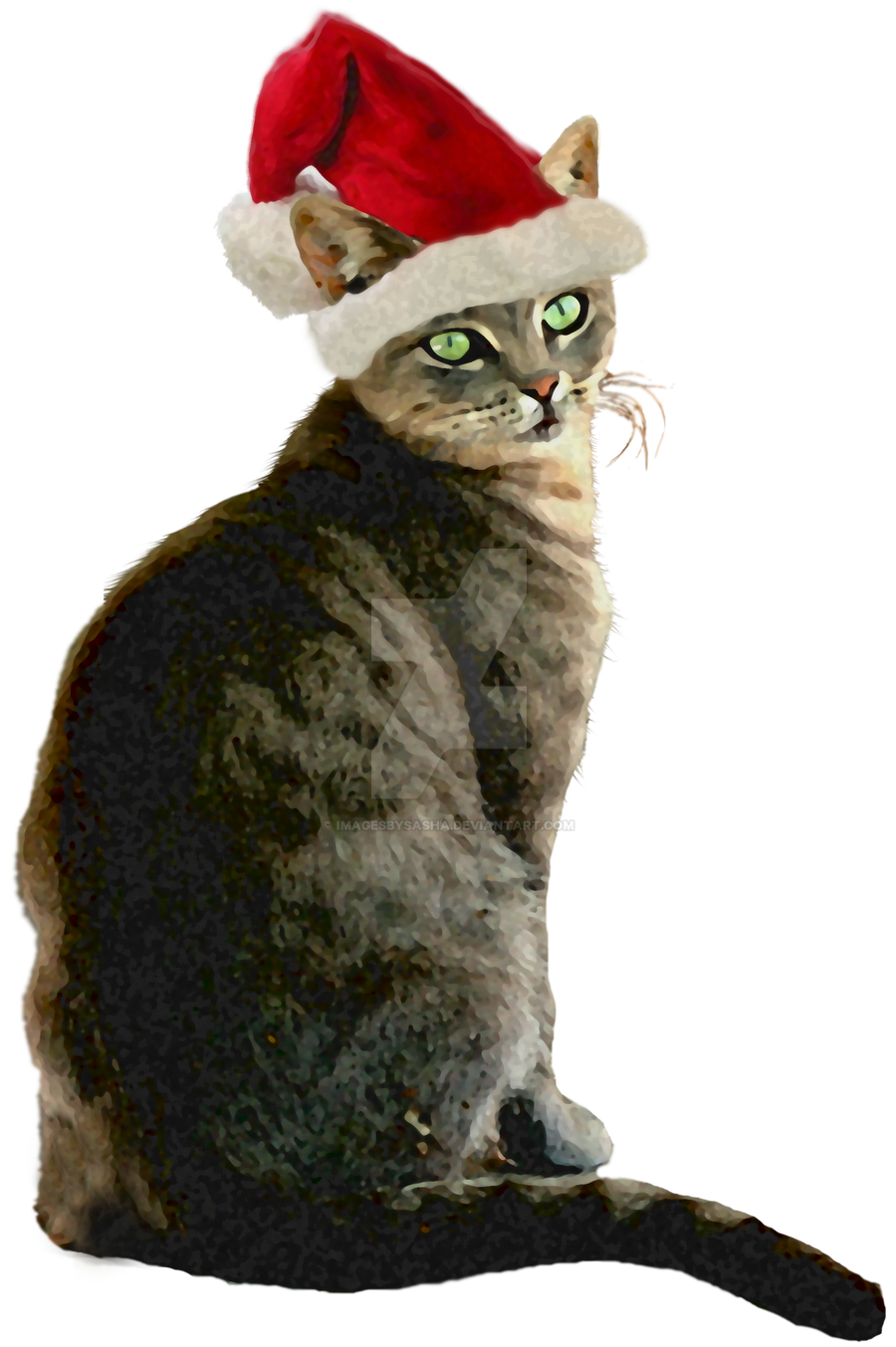 Cat With Xmas Hat