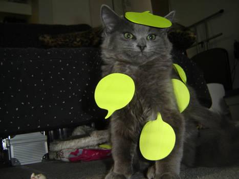 Cute Cat Eek
