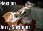 Jerry springer cats
