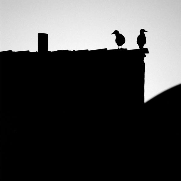Angry Birds by CarlosBecerra