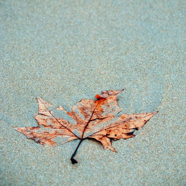Again Autumn by CarlosBecerra
