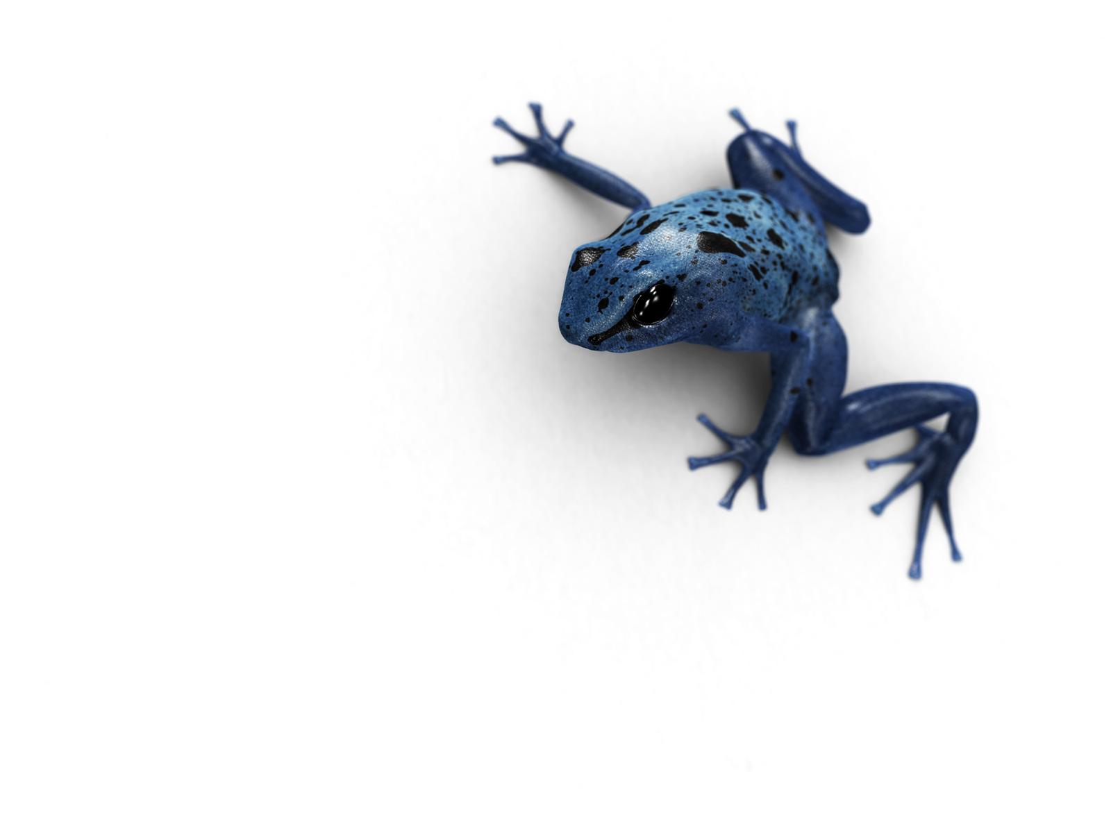 Blue Poison Dart Frog by Uenom on DeviantArt