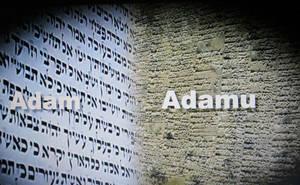 Adam=Sumerian/Akkadian/Babylonian Adamu/Adapa by StevenEly