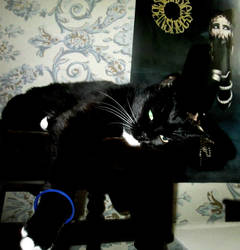 InternationalCatDay is Everyday For Me by FreakTerrorizes