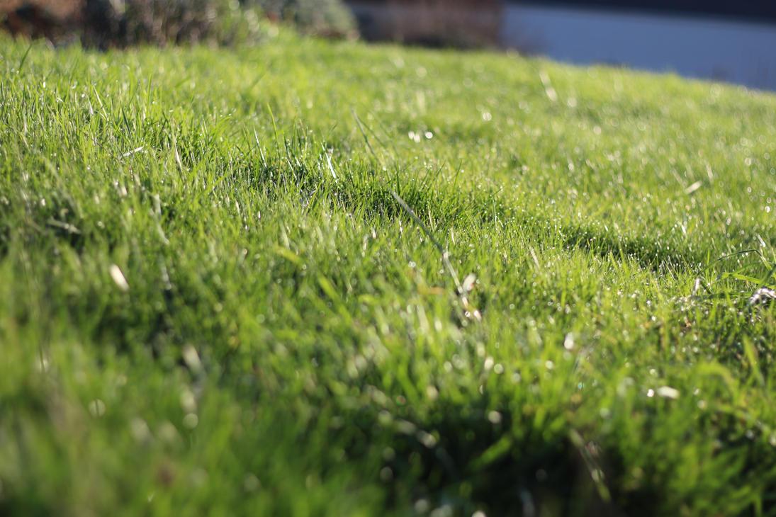 Grass by Nokaw