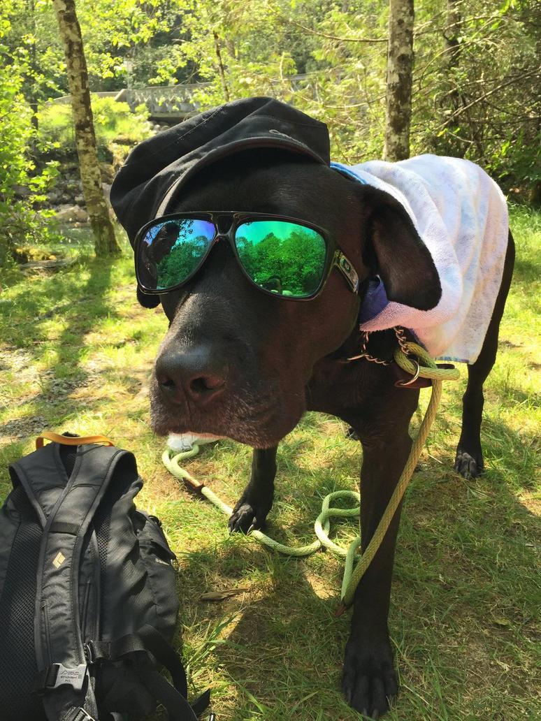 Super Dog by Crampt