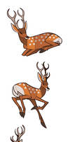 Studies - Deer by oxboxer