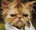 Grumpy Kitty by HellzDemonChik