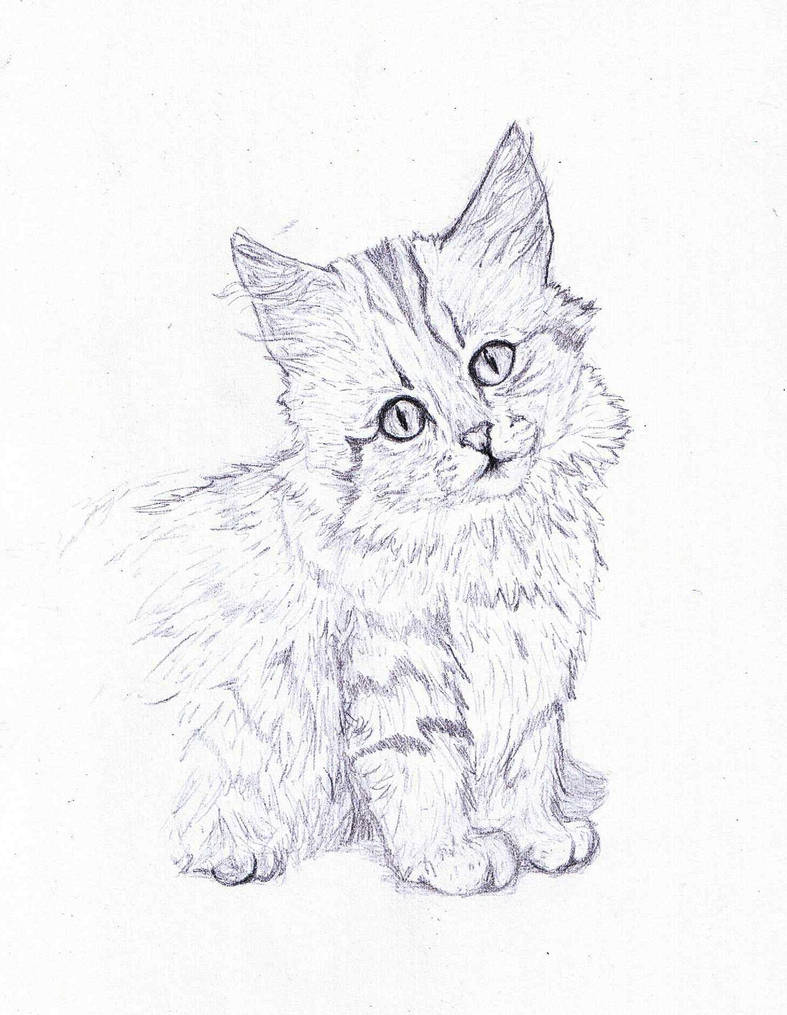 Norwegian forest cat pencil drawing by themasterofsuicide on