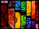 My Rainbow by One-Sinful-Desire