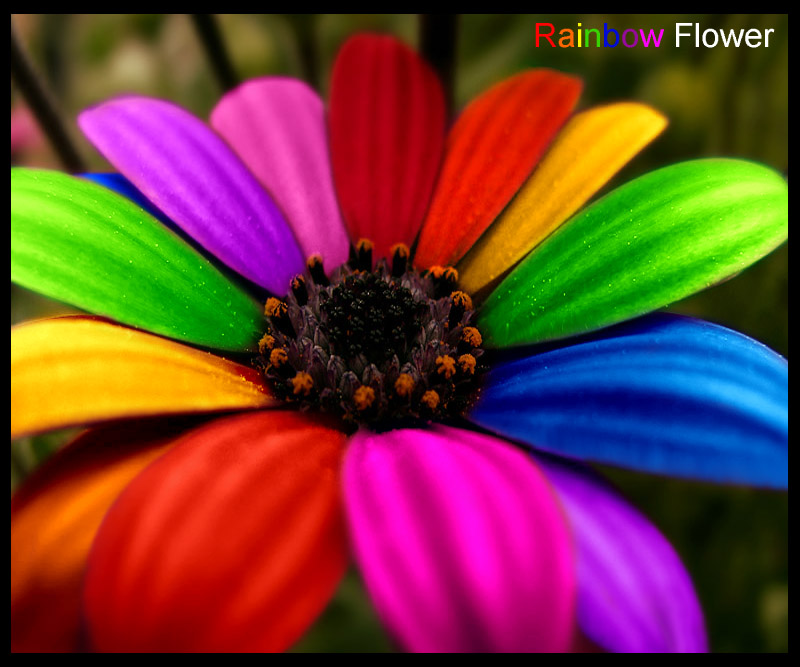 rainbow flowers wallpaper paintings - photo #33