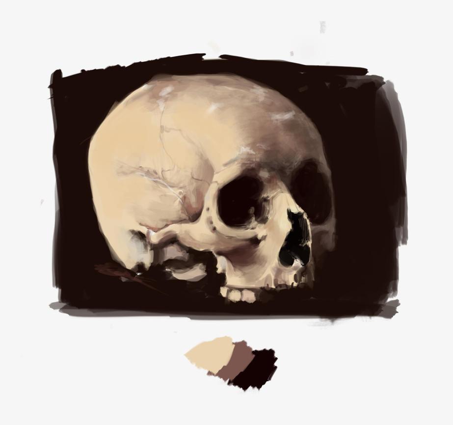 Skull by Man-arts