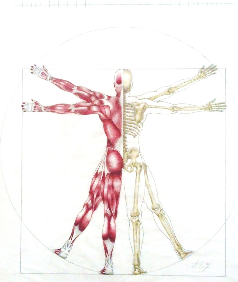 Vitruvian Man Anatomy Rear View By Tommycoxiv On Deviantart