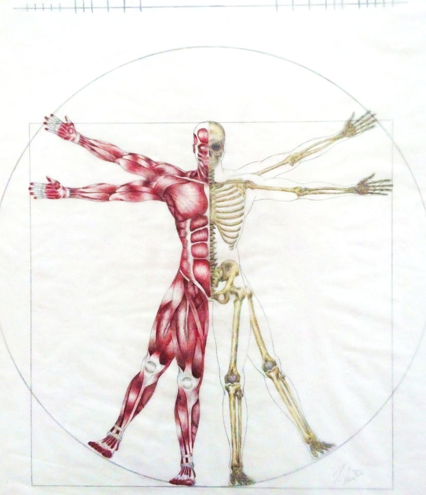 Vitruvian Man Anatomy Front View By Tommycoxiv On Deviantart