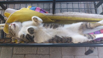 uykucu kedi by tiny14