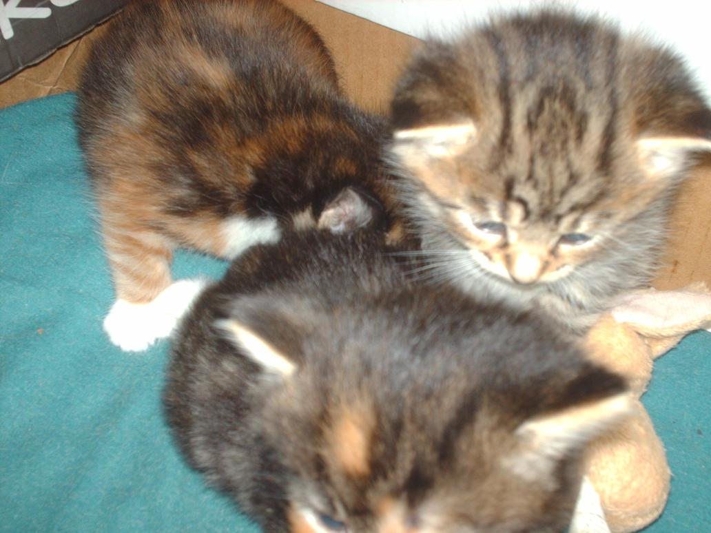 kittens 1 by 707cloud