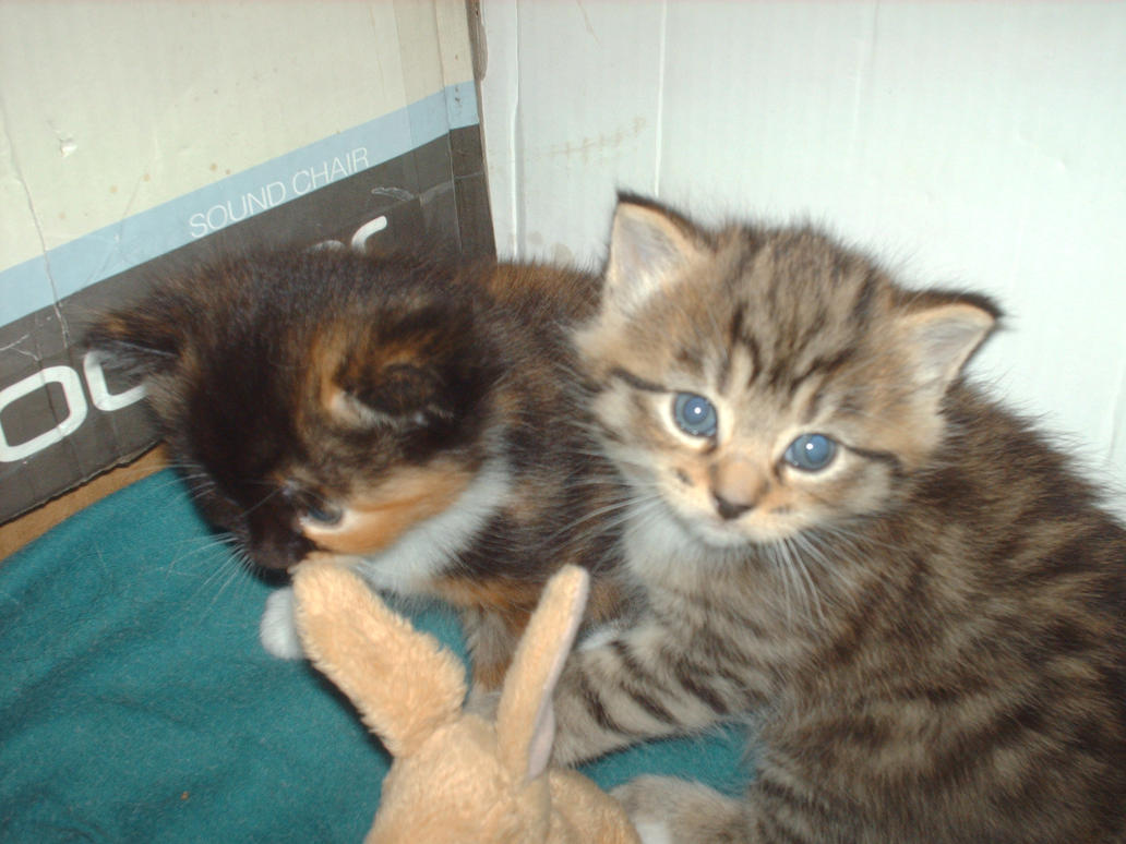 kittens 2 by 707cloud