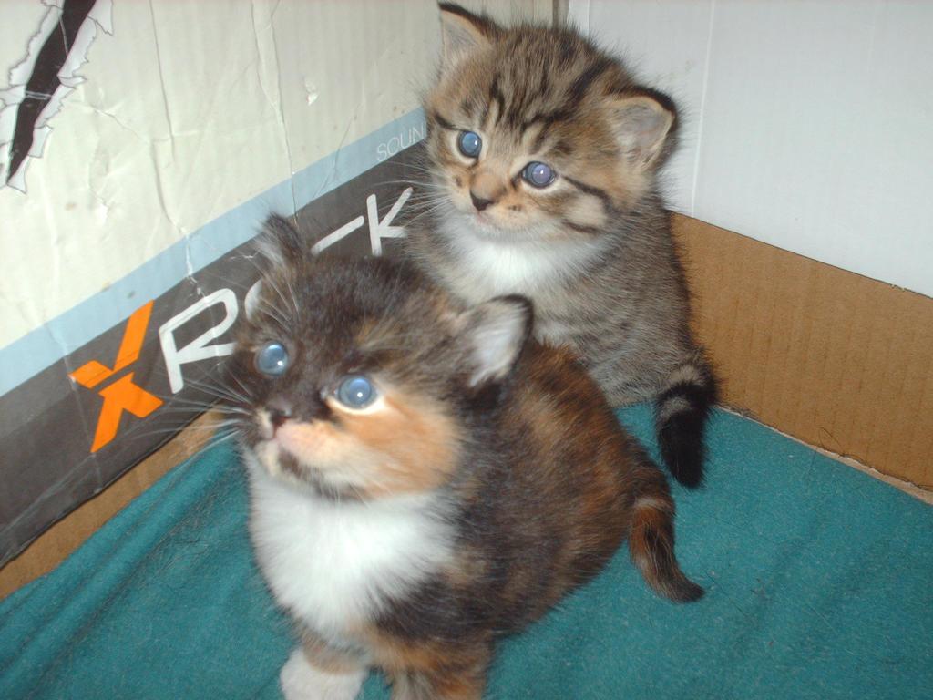 kittens 3 by 707cloud