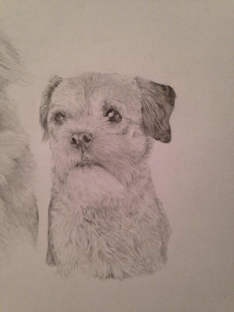 Dog 2-up close by pottenuss