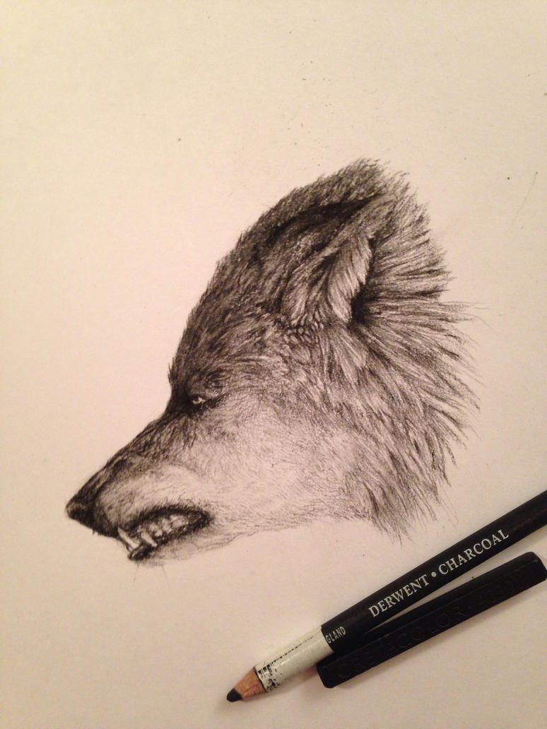 Wolf head charcoal by pottenuss