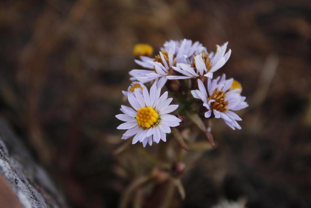 Hello, flower by pottenuss