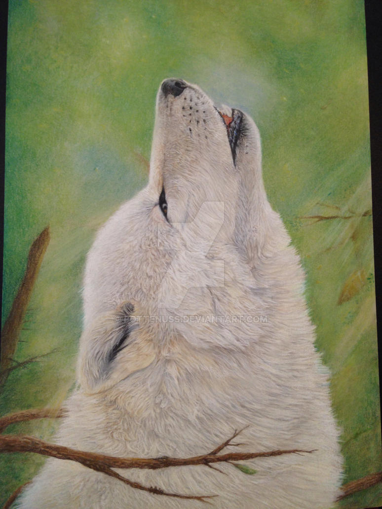 Wolf pastel portrait by pottenuss