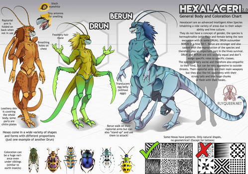 Hexalaceri - General Body and Coloration Chart