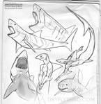 Shark Sketchpage