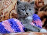 Cat in a sock