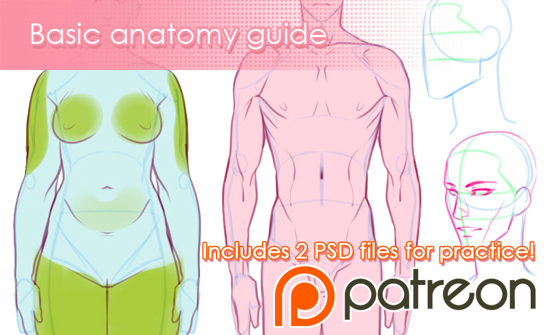 Patreon - Basic anatomy guide by Noiry