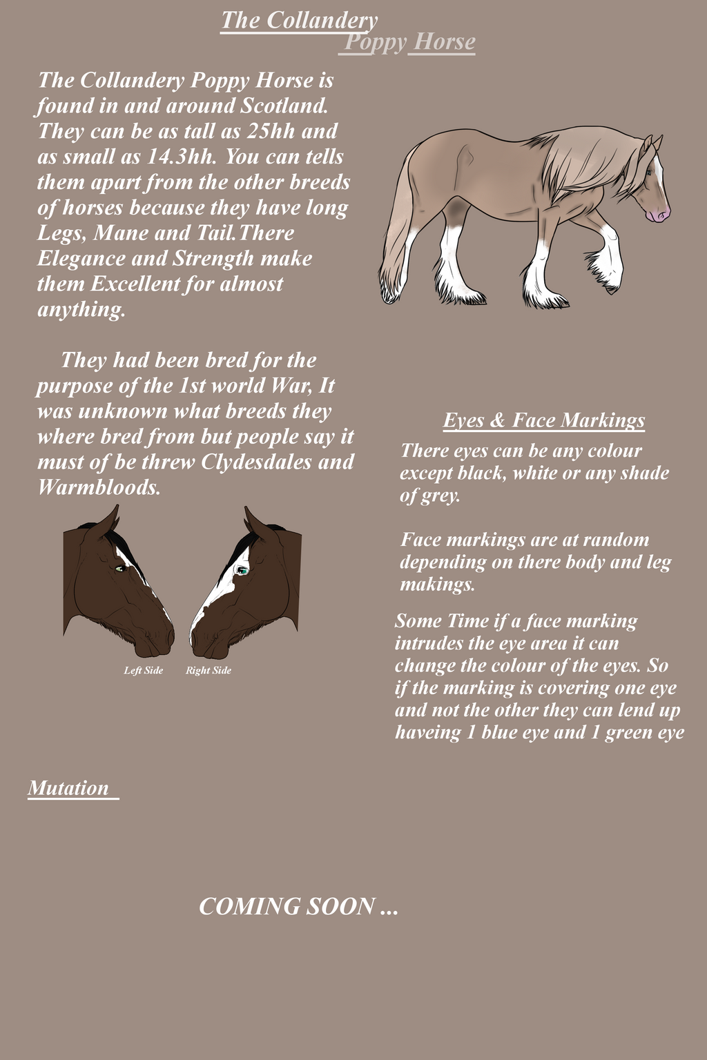 The Collandery Poppy Horse Breed Sheet by NorthernMyth