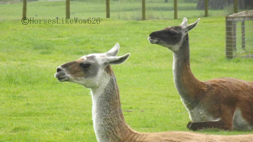 Blair Drummond Safari Park 009 by NorthernMyth