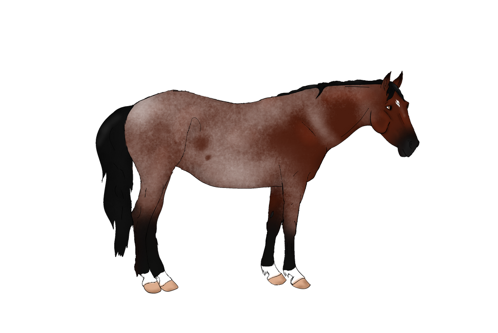 Bay Roan Pony Design by NorthernMyth