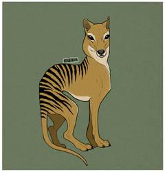 Extinct - Thylacine