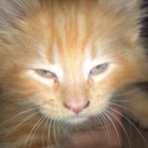 bolognafingers's Profile Picture