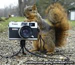 Club ID by wildlifephotography
