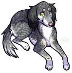 hello, my name is saluki by PeachTabby