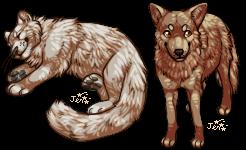 kitty coyote by Kiboku