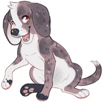 Beagle Boy Adopt - SOLD