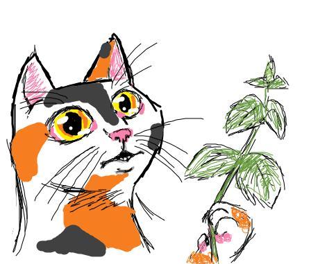 catnip by jaykitsune