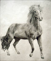 Mare Drawing by Jezarae