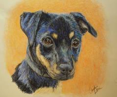 Puppy Eyes by Jezarae