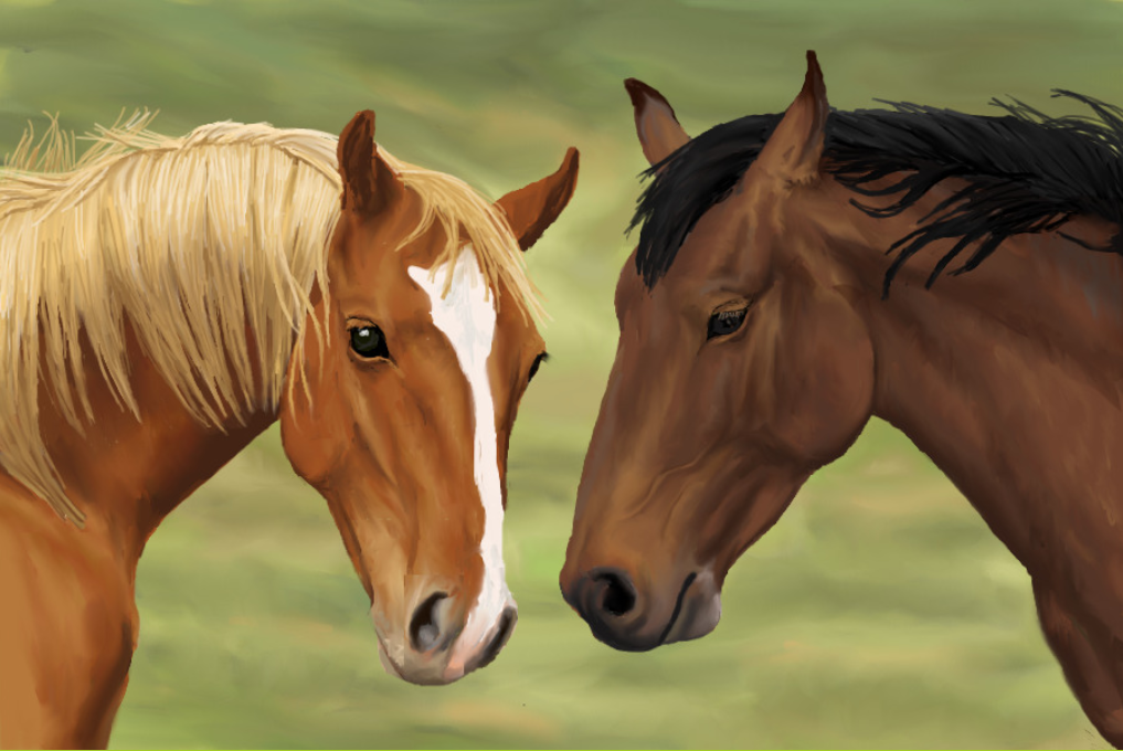horse wallpaper awesome pair - photo #6