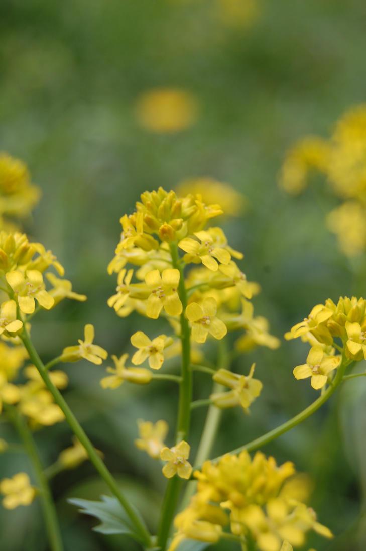 Little Yellow Flowers by spikerommel