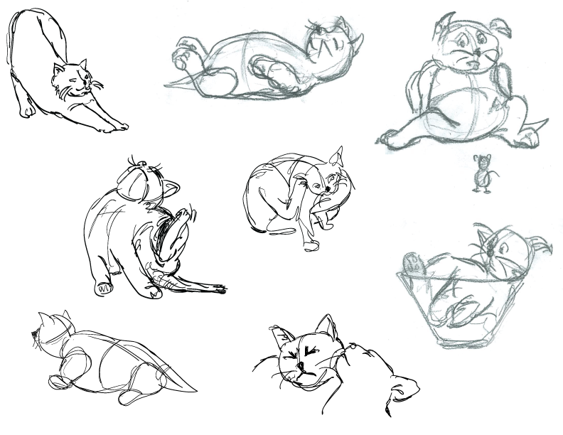 Cat Sleeping Positions And What They Mean