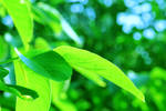Green Leaf by MeszesPhoto