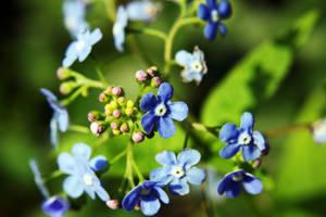 Flowers like plastic by aajohan